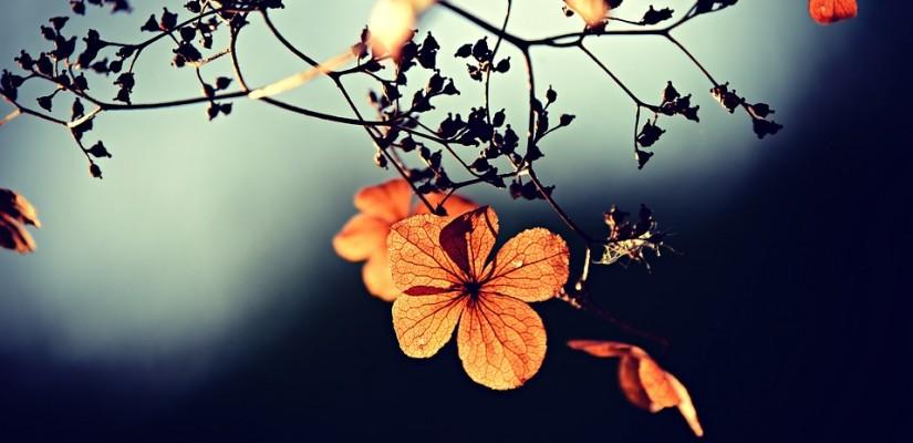 Öyle de, şu çiçek bir mühr-ü Rahmânîdir