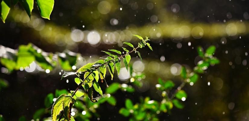 Sonra Yağmura Bakar Görür Ki